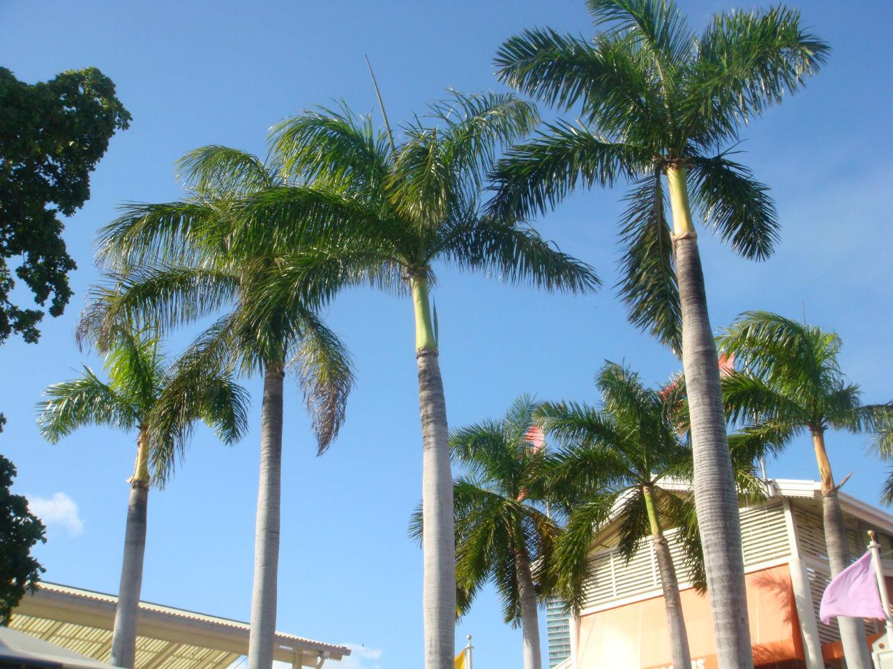 palmiers floride
